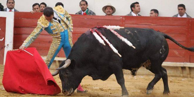 EL CASCABEL DEL GATO: DE LO QUE PARECE BUENO.